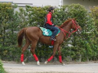 森厩舎、今週の新馬と世界的良血