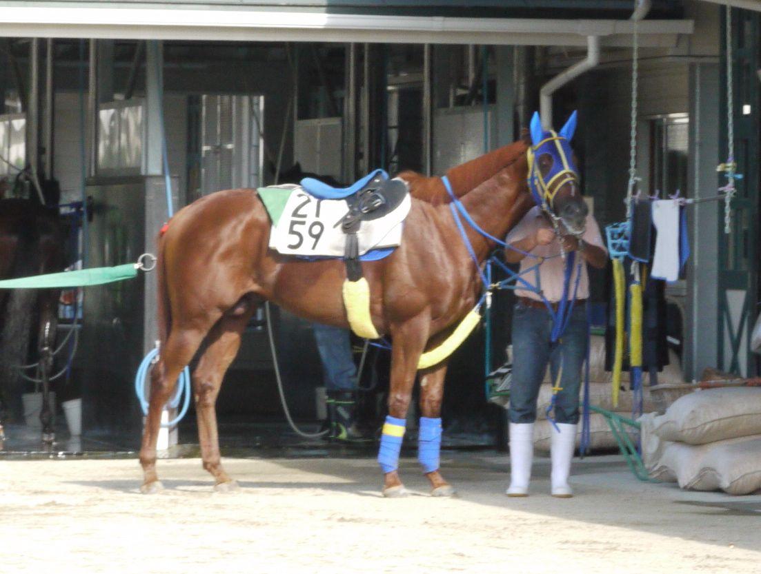 今週のKeiba@nifty<br />  は平田修厩舎の2歳馬です